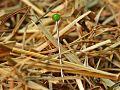 needle-in-a-haystack-1752846_1280_opt.jpg