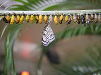 butterfly-life-cycle-3264176_1920_opt